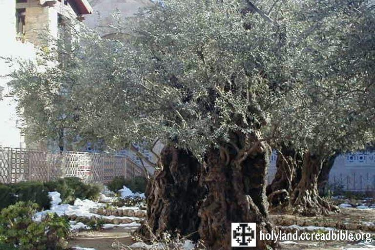 Gethsemane-2